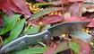 Нож Kizer Trifecta Ki5462A2 цена