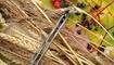 Нож CH 3001 gray Сумы