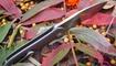 Нож Kizer Hustler Ki5464A1 фото