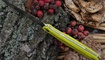 turisticheskiy nozh realsteel metamorph fixed fruit green tsena