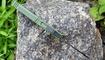 Выкидной нож-брелок зеленый купить